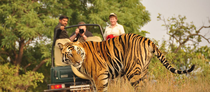 Incredible wildlife tours and tiger Safari Tour in India