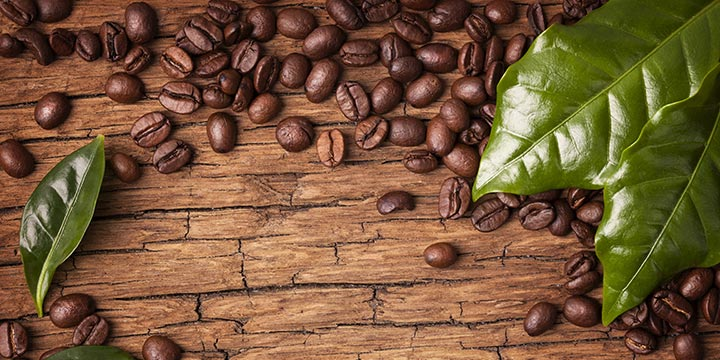 Image result for arabica coffee