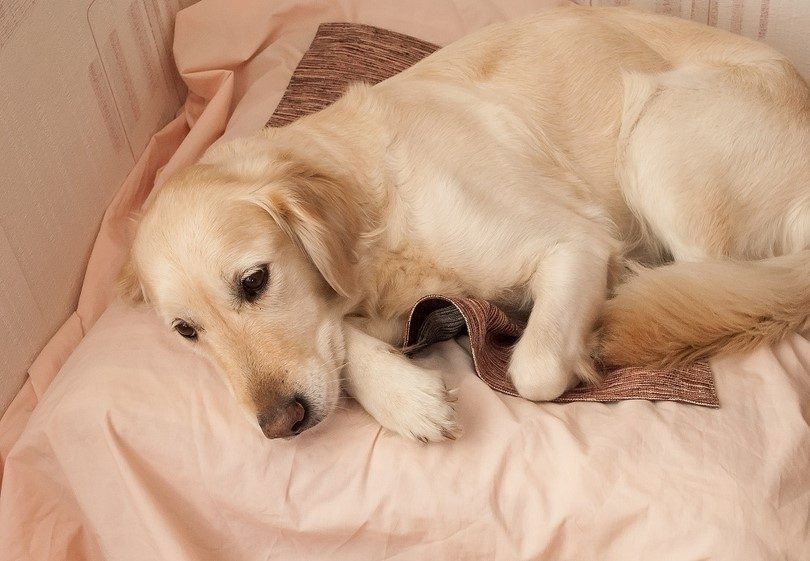 How to Quickly Treat Dog Worms With Natural and Conventional Options