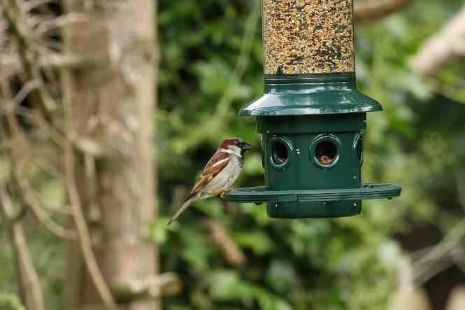 3 Hacks For Creating Your Own Bird Habitat