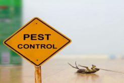 6 tips to prevent pests at home