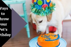 Ways to Throw your Pet's Birthday.jpg