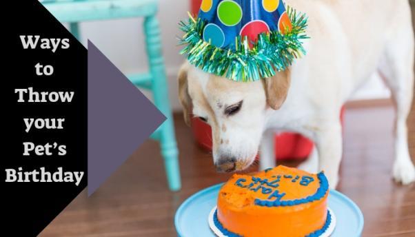 5 Amazing Ways to throw your Pet's Birthday
