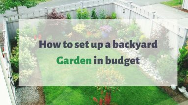 How to set up a backyard Garden in budget